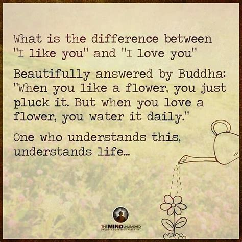 what s the difference between like and the difference between i like you and i you buddha