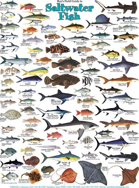 fish saltwater chart fishing deep water salt birds posters roy