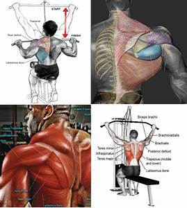Muscles Of The Back