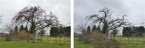 apfelbaum schneiden obstbaumschnittschule