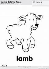 Lamb Coloring Flashcards Simple Super Worksheets Animal Flashcard Activities Mary Had Songs Esl Learning Supersimplelearning Animals Kangaroo Supersimpleonline Kaynak sketch template
