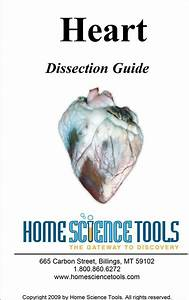 Heart Dissection Guide
