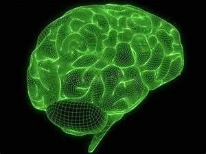 Wire Brain Stock Illustration  Illustration Of Dimensional