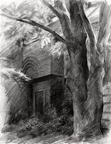 Drawing of Tree Pencil Sketch