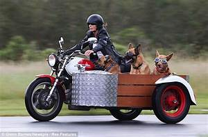 In for a ruff ride: Trio of dogs hit the open road in a ...