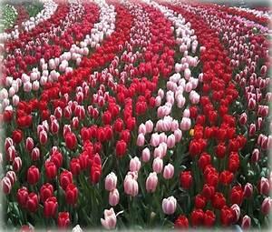 Fotos De Jardines Con Muchas Flores Imagenes Para Mama