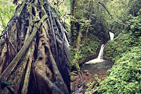 visiting  monteverde cloud forest reserve