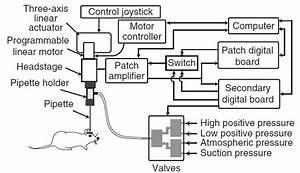 Robotic Patch
