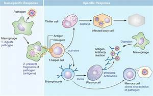 Biology 11  Topic 24  The Immune System
