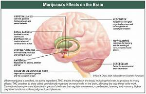 marijuana as a medical treatment