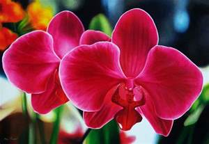 black roses for sale how to care for orchids flower inspirationseek