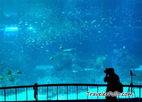 image gallery oceanarium opening times