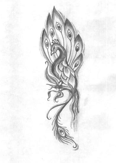 peacock drawing tattoo google search peacock tattoo