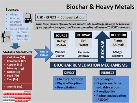 biochar-remediation-mechanisms-v2 | Finger Lakes Biochar