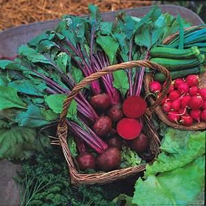 Rote Beete Englisch : rote beete bolthardy samen bestellen chili chili food ~ Orissabook.com Haus und Dekorationen