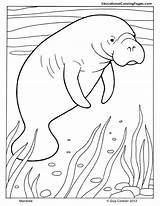 Manatee Coloring Pages Mammals Printable Animal Manatees Dugong Cute Print Animals Drawings Ocean Adult Colouringpages Intrepid Ibex Rocks Worksheets Template sketch template