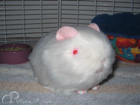Little Albino Guinea Pig Plush By Morumoto On Deviantart