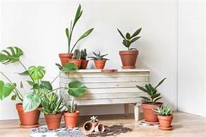 meuble plante interieur With meuble plantes d interieur