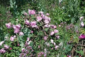 Rosenbeet Mit Stauden : rosen kombinieren gartentr ume ~ Frokenaadalensverden.com Haus und Dekorationen