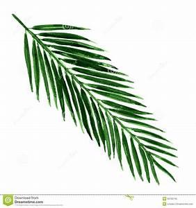 Single Palm Leaf Clipart - Clipart Suggest