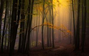 Nature, Landscape, Fall, Mist, Forest, Leaves, Path