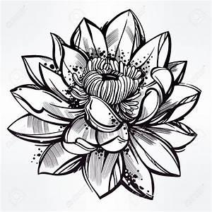 Dessin Fleurs De Lotus : dessin fleur de lotus tatouage noir et blanc kolorisse developpement ~ Dode.kayakingforconservation.com Idées de Décoration