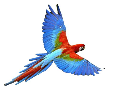 animals pictures gallery bird screaming problems