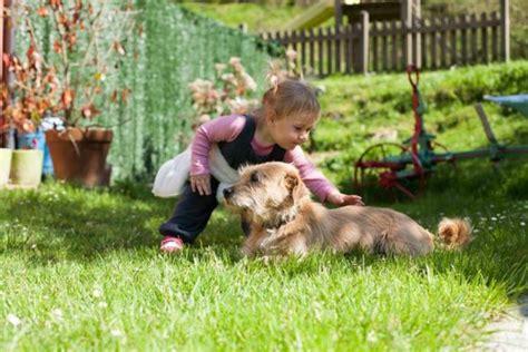 Hund Im Garten So Wird Der Garten Hundesicher & Gerecht