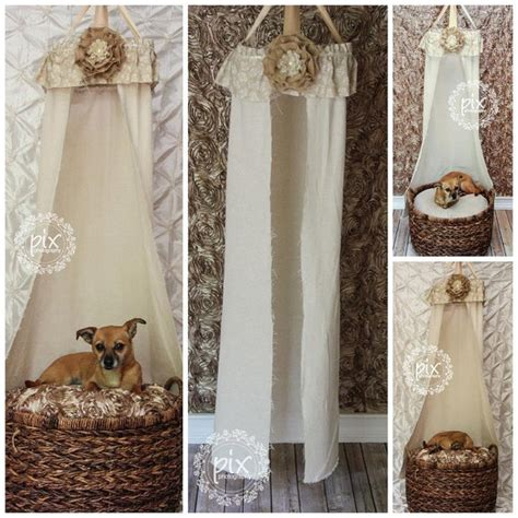 shabby chic photo shoot 34 best images about chihuahua photo shoot ideas on pinterest