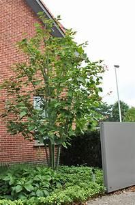 Kleine Bäume Für Vorgarten : kleiner baum garten die sch nsten einrichtungsideen ~ Michelbontemps.com Haus und Dekorationen