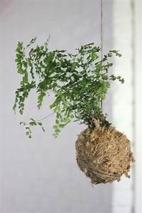 Kokedama Selber Machen : trendy ideas for diy home kokedama string balls a diy hanging ~ Orissabook.com Haus und Dekorationen