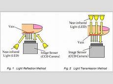 Fingerprint vs vascular biometrics – What are the differences