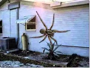 Biggest Most Vicious Deadly Spider In The World Found ...