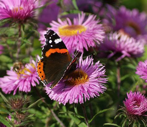 top 25 flowers for pollinators garden pics and tips
