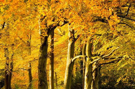 autumn trees  stock photo public domain pictures