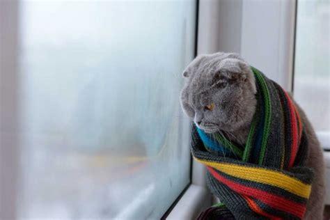 Katze Erkältung Behandlung