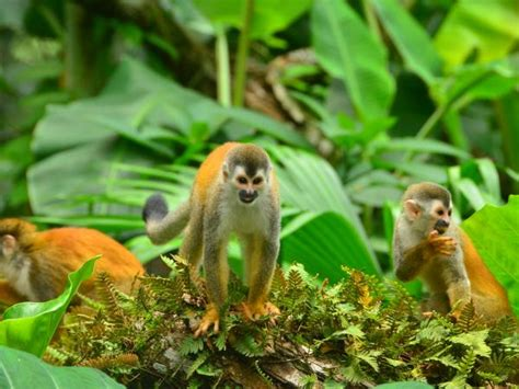 wildlife vacations costa rica tours vacations