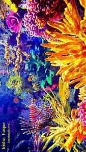 Nature paints the most beautiful masterpieces: Coral reefs