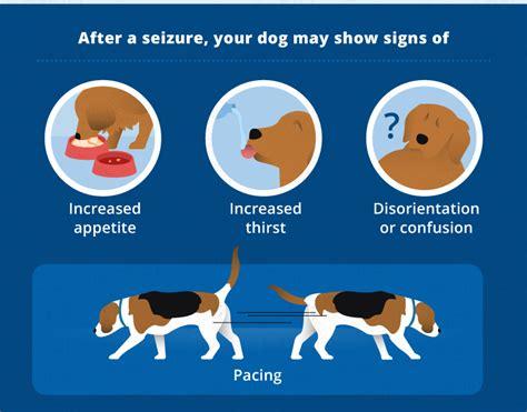 Dog Seizures Epilepsy