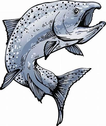 Salmon Fish Drawings Vector Drawing Jumping Colors