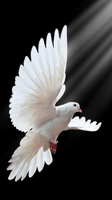 dove gif world community google burung cantik merpati