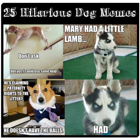 Pet Meme - 25 funny dog memes dog memes memes and hilarious