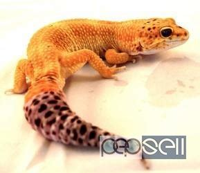 All types of exotic birds animals and reptiles for sale