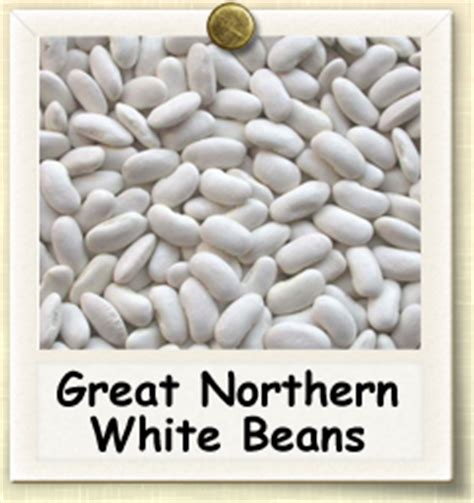 How To Grow Great Northern White Beans  Guide To Growing. Executive Recruiting Software. Houston Police Academy Powerheart Aed G3 Pads. Ultra Clean Carpet Cleaning Fiat Dealer Nj. Honda Accord Gas Mileage 2012. Ecommerce Builder Software Home Pest Control. Fashion Colleges California Ga Criminal Law. How To Make A Survey Questionnaire. Mli Usa Variable Annuity Series L