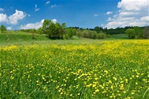 Wiese Mit Blumen : gelbe wiesenblumen stockbild bild 22475581 ~ Watch28wear.com Haus und Dekorationen