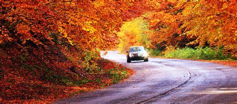 leaves sun glare   fall driving tips safelite