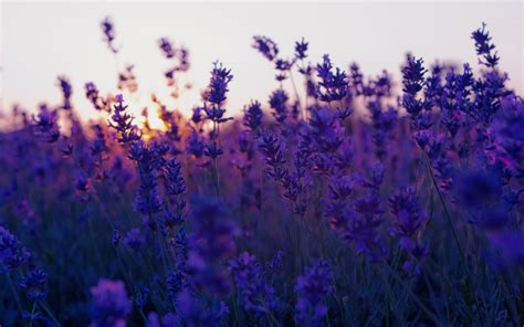 Purple Background Tumblr ·① Download Free Stunning Full Hd
