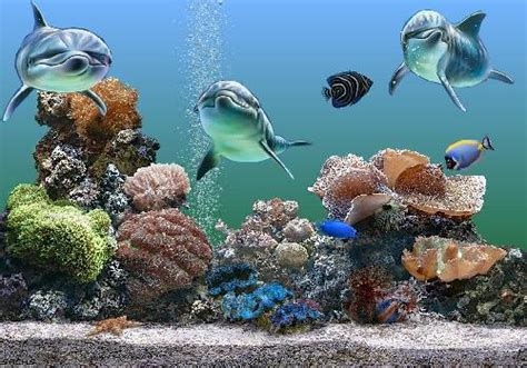 fond d ecran poisson qui bouge خلفيات و صور من قاع البحر والأسماك صور ورسوم