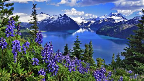 hd wallpaper landscape nature lake mountains flowers