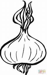 Onion Coloring Onions Drawing Pages Printable Apple Vegetable Supercoloring Clipart Cartoon Template Vegetables Crafts Garlic Sketches Plant Printing Getdrawings Three sketch template
